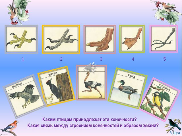 1 2 3 4 5 Каким птицам принадлежат эти конечности? Какая связь между строение...
