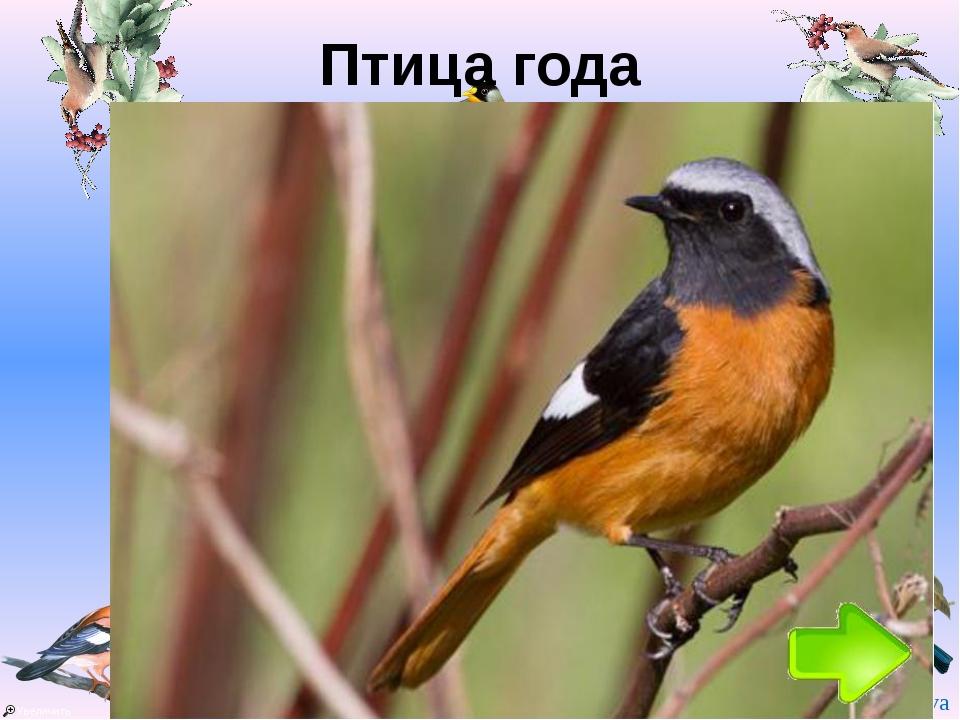 Птица года Год Птица 1996 Коростель 1997 Полевой жаворонок 1998 Серый журавль...