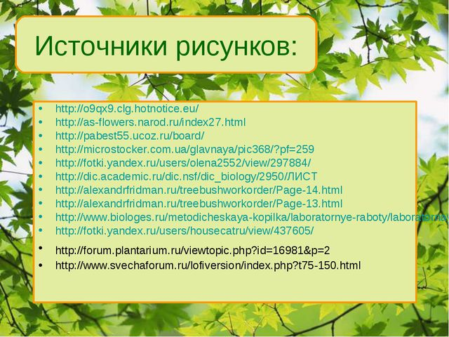 Источники рисунков: http://o9qx9.clg.hotnotice.eu/ http://as-flowers.narod.ru...