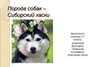 Порода собак – Сибирский хаски Выполнили: ученицы 3 Г класса Ширинина Виктори