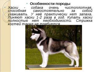 Особенности породы Хаски - собака очень чистоплотная, способная самостоятельн