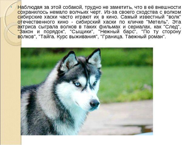 Наблюдая за этой собакой, трудно не заметить, что в её внешности сохранилось...