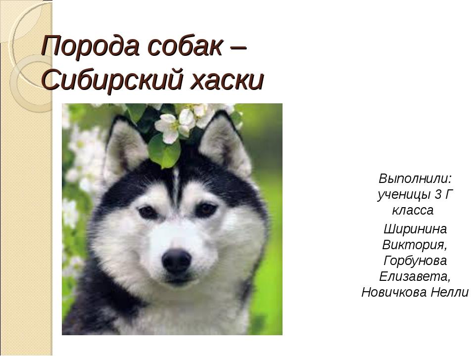 Порода собак – Сибирский хаски Выполнили: ученицы 3 Г класса Ширинина Виктори...