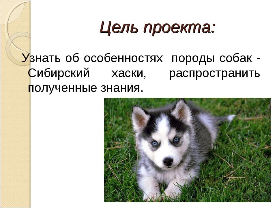 Цель проекта: Узнать об особенностях породы собак - Сибирский хаски, распрост...