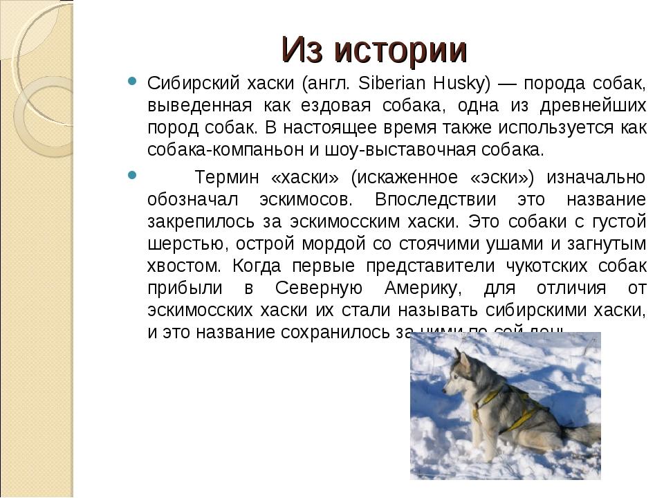 Из истории Сибирский хаски (англ. Siberian Husky) — порода собак, выведенная...