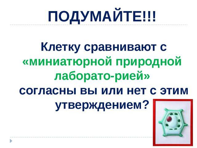 ПОДУМАЙТЕ!!! Клетку сравнивают с «миниатюрной природной лабораторией» соглас...