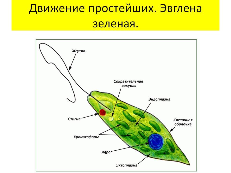 сдать анализ на паразитов институт паразитологии