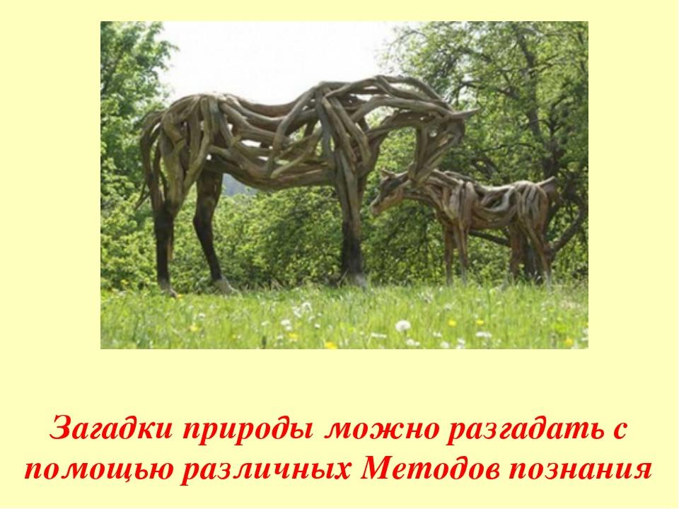 Загадки природы можно разгадать с помощью различных Методов познания