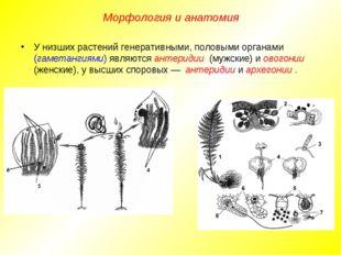 У низших растений генеративными, половыми органами (гаметангиями) являются ан