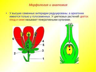 У высших семенных антеридии редуцированы, а архегонии имеются только у голосе