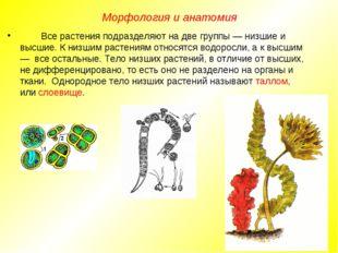 Все растения подразделяют на две группы — низшие и высшие. К низшим растения