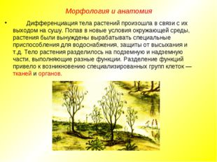 Дифференциация тела растений произошла в связи с их выходом на сушу. Попав в