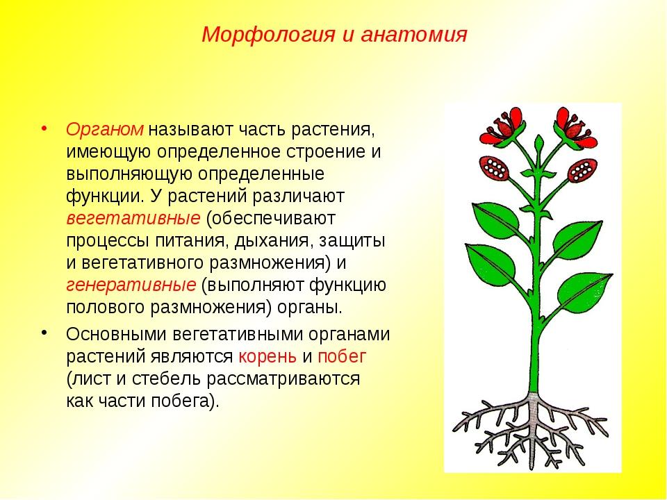 Органом называют часть растения, имеющую определенное строение и выполняющую...