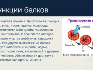 Функции белков Транспортная функция. Дыхательная функция крови, в частности
