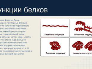 Функции белков Структурная функция. Белки, выполняющие структурные функции, з
