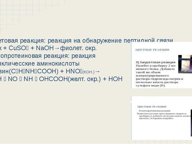 Цветные реакции Биуретовая реакция: реакция на обнаружение пептидной связи Бе...