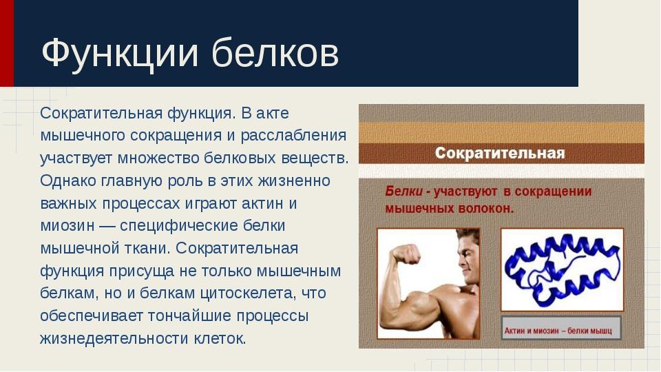 Функции белков Сократительная функция. В акте мышечного сокращения и расслабл...