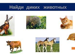 Найди диких животных