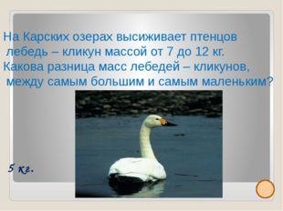 Малый или тундровой лебедь достигает длины до 120 см, а массы до 6 кг. Внесе
