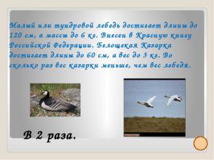 266-302 Частые туманы, особенно в теплое время и на побережье от 64-100 дней