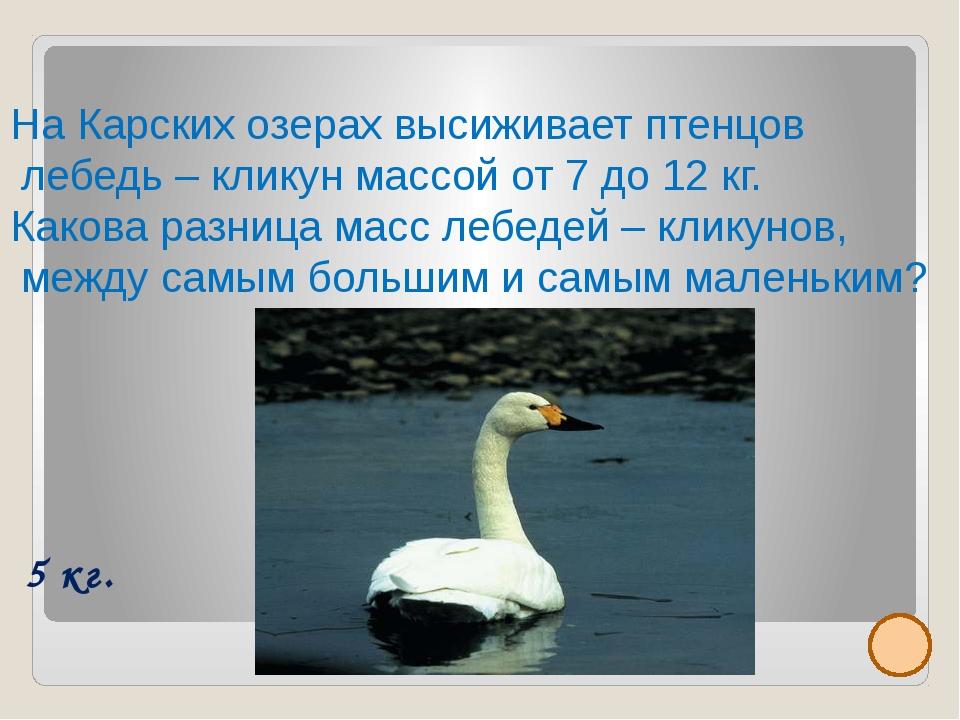 Малый или тундровой лебедь достигает длины до 120 см, а массы до 6 кг. Внесе...