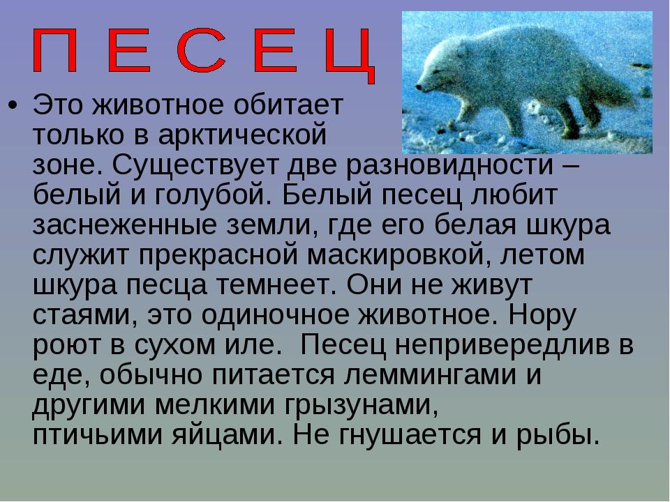 Это животное обитает только в арктической зоне. Существует две разновидности...