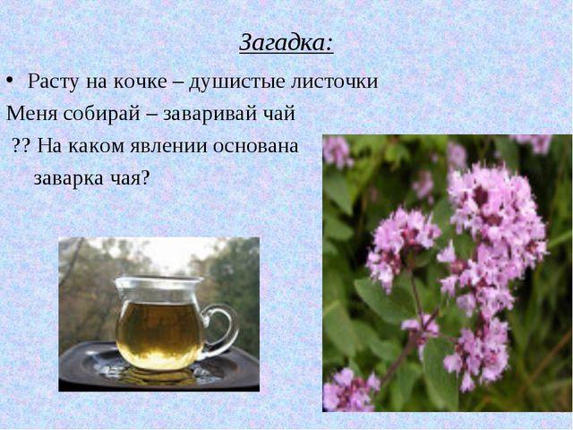 Загадка: Расту на кочке – душистые листочки Меня собирай – заваривай чай ?? Н...