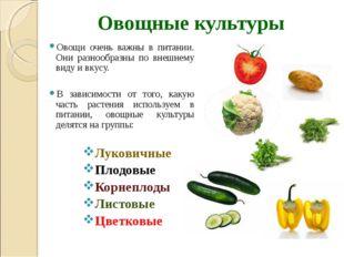 Овощные культуры Овощи очень важны в питании. Они разнообразны по внешнему ви