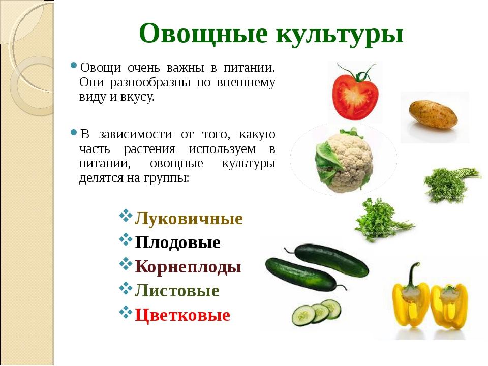 Овощные культуры Овощи очень важны в питании. Они разнообразны по внешнему ви...
