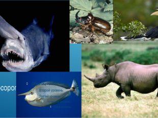 Рыба-носорог