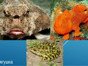 Морская Рыба лягушка Рыба-лягушка