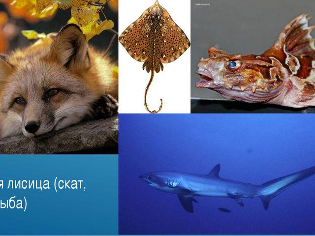 Морская лисица (скат, акула, рыба)