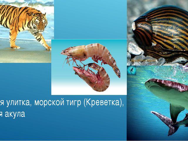 Тигровая улитка, морской тигр (Креветка), тигровая акула