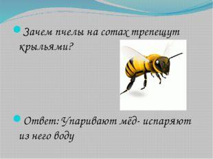 Зачем пчелы на сотах трепещут крыльями? Ответ: Упаривают мёд- испаряют из нег
