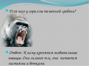 Для чего у гориллы теменной гребень? Ответ: К нему крепятся жевательные мышцы
