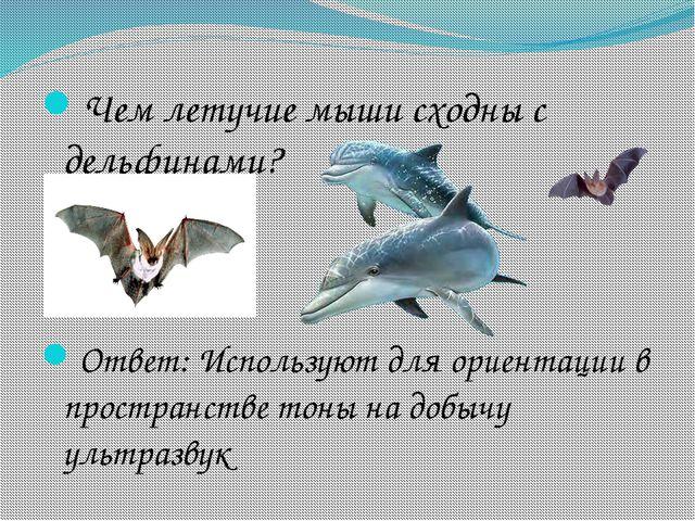 Чем летучие мыши сходны с дельфинами? Ответ: Используют для ориентации в прос...