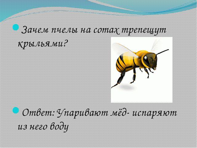 Зачем пчелы на сотах трепещут крыльями? Ответ: Упаривают мёд- испаряют из нег...