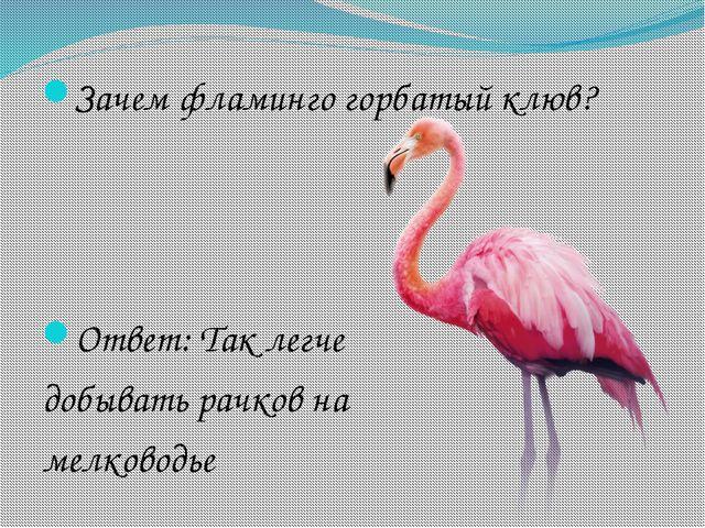 Зачем фламинго горбатый клюв? Ответ: Так легче добывать рачков на мелководье