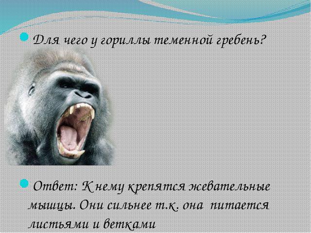 Для чего у гориллы теменной гребень? Ответ: К нему крепятся жевательные мышцы...