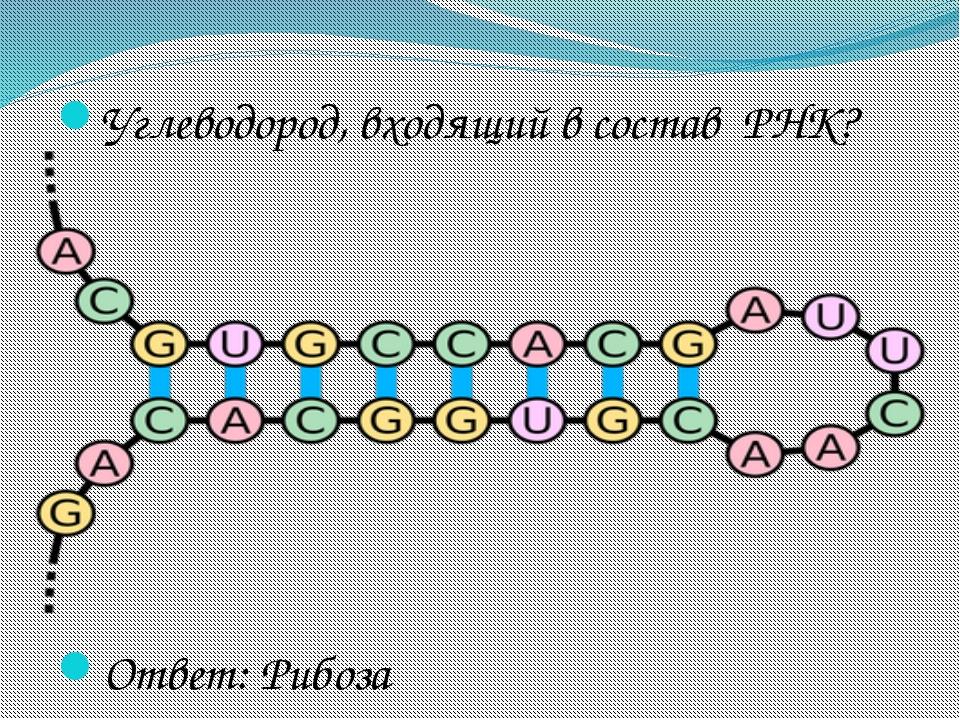 Углеводород, входящий в состав РНК? Ответ: Рибоза