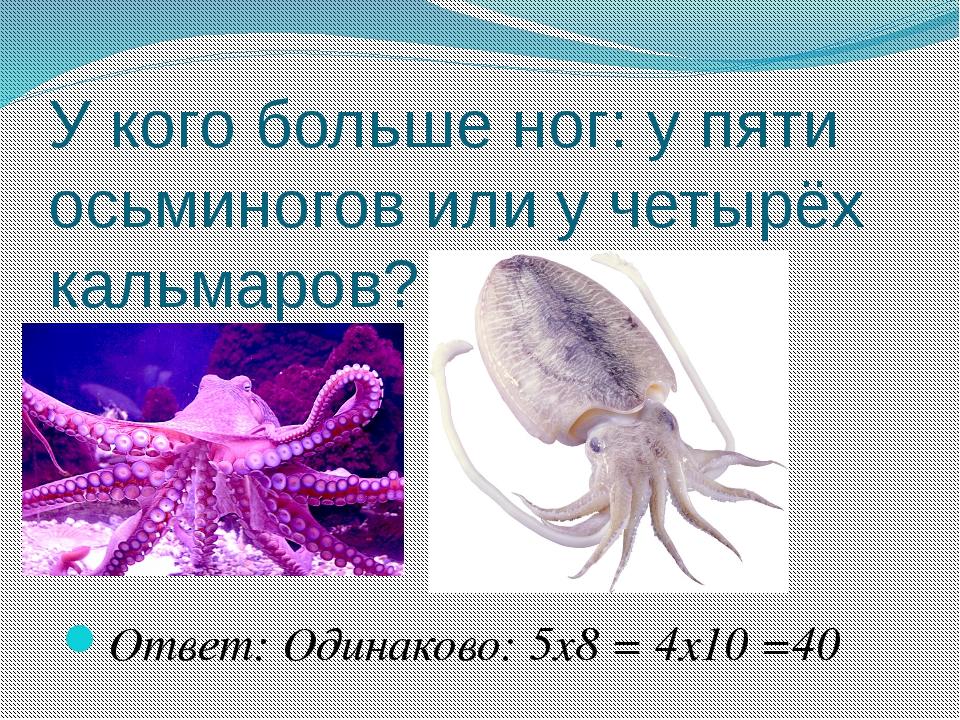 У кого больше ног: у пяти осьминогов или у четырёх кальмаров? Ответ: Одинак...