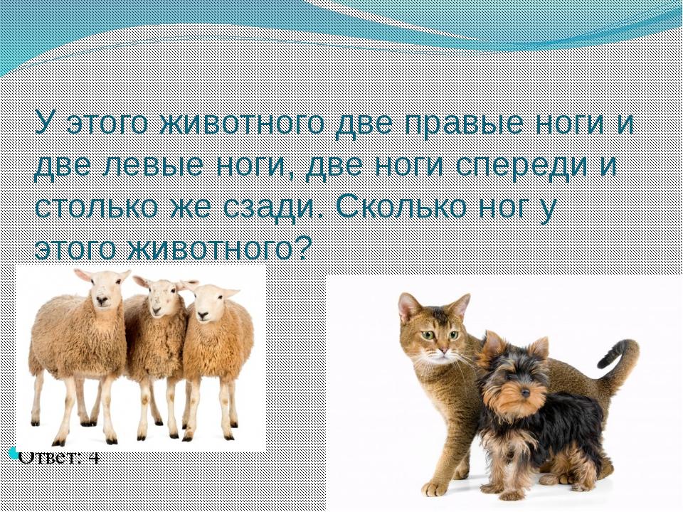 У этого животного две правые ноги и две левые ноги, две ноги спереди и стольк...