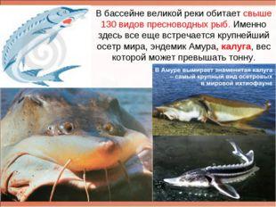 В бассейне великой реки обитает свыше 130 видов пресноводных рыб. Именно здес