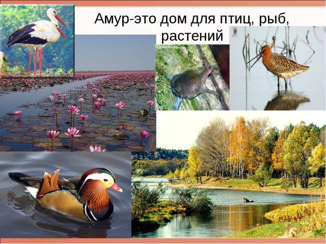 Амур-это дом для птиц, рыб, растений