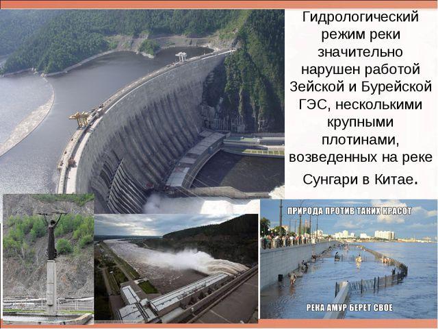 Гидрологический режим реки значительно нарушен работой Зейской и Бурейской ГЭ...