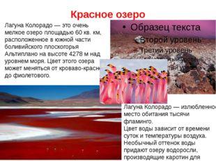 Красное озеро Лагуна Колорадо — излюбленное место обитания тысячи фламинго. Ц