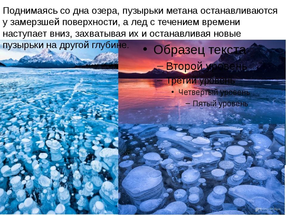 Поднимаясь со дна озера, пузырьки метана останавливаются у замерзшей поверхн...