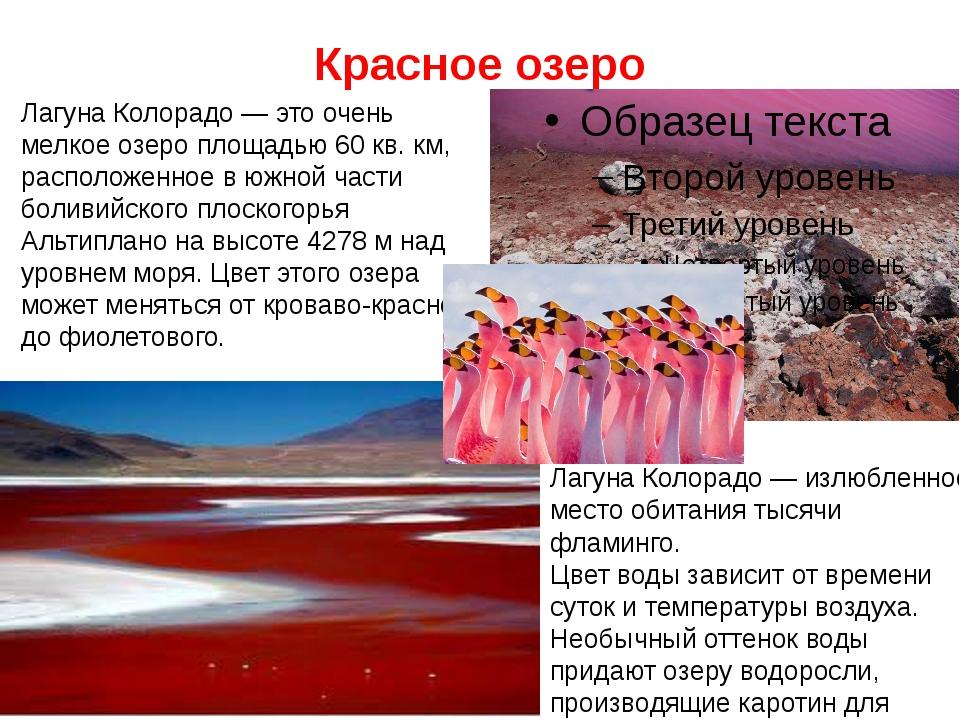 Красное озеро Лагуна Колорадо — излюбленное место обитания тысячи фламинго. Ц...