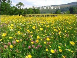 Строение растения Многоклеточные растения