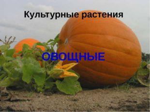 Культурные растения ОВОЩНЫЕ